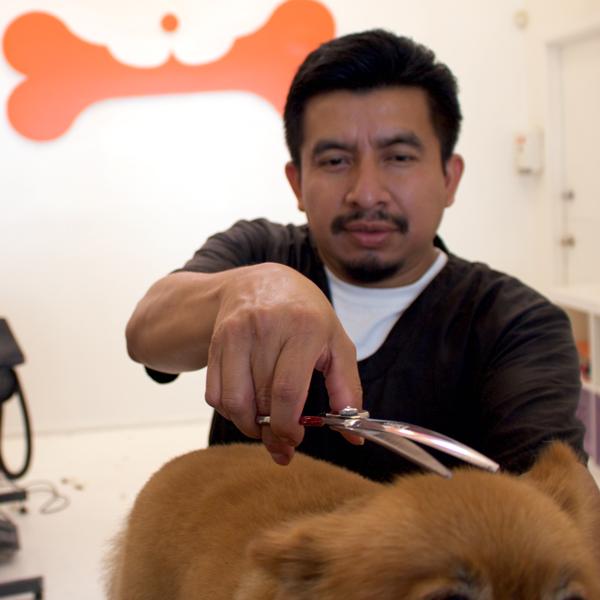 Dog Grooming Brea